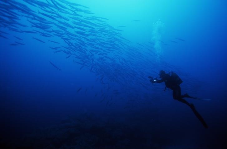 Tauchen im Atlantik um Madeira