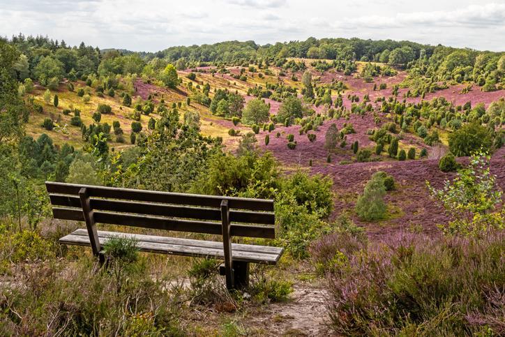 Sitzbank mit Blick auf die Lüneburger Heide mit einzelnen Büschen und rosa Heidekraut