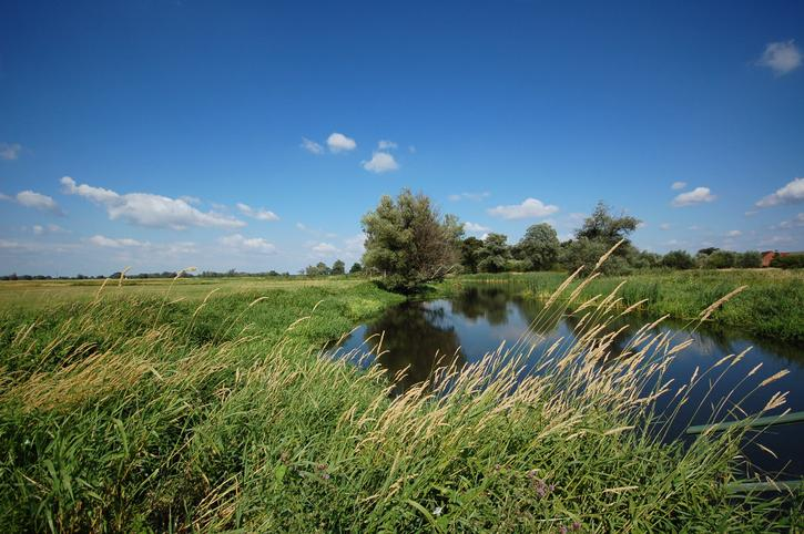 Kleiner See inmitten grüner Wiesenlandschaft mit Gräsern im Vordergrund